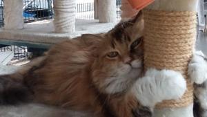 Una zampa aiuta l'altra: crowdfunding per la cura dei gatti-