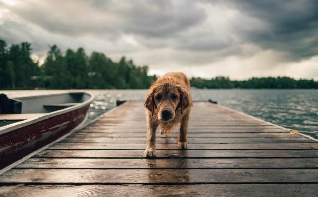 Contro l'abbandono dei cani, MSD carica i suoi dipendenti-Francesca Gervasoni